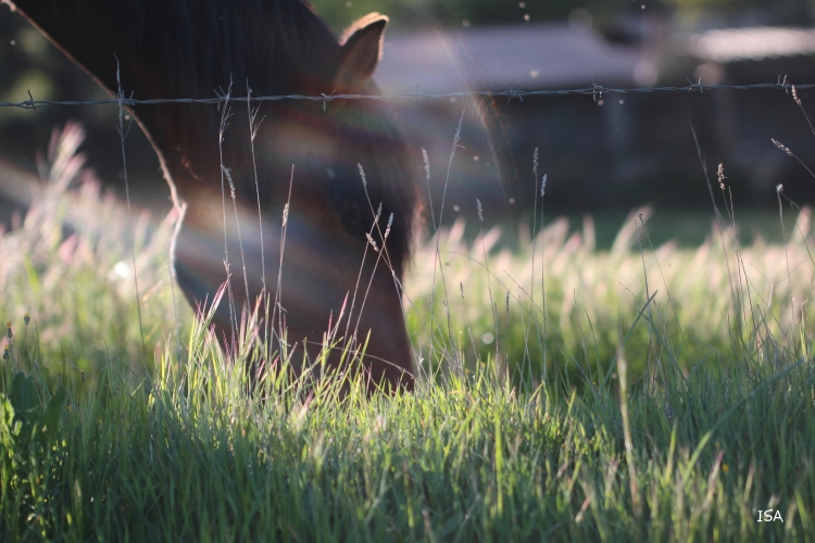 PHOTO cheval herbe rayon soleil harmonie - harmonie