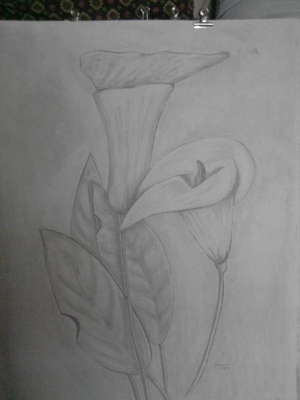 Dessin Fleurs Crayon Nature Morte