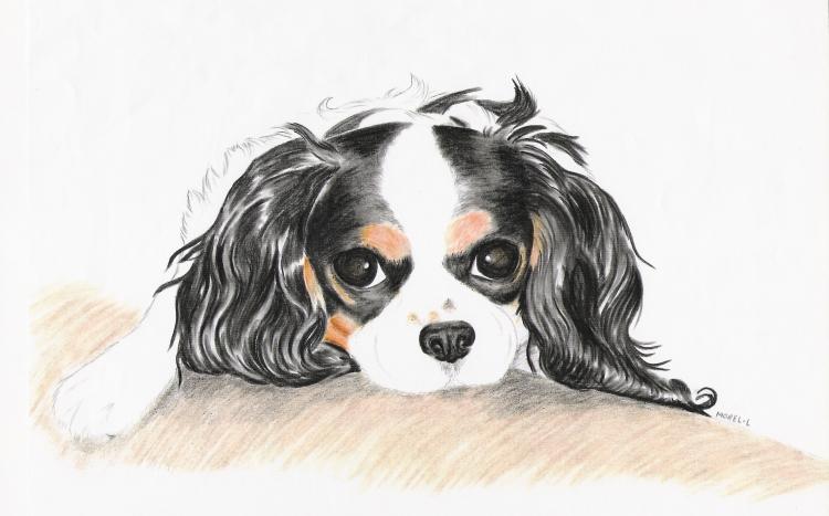 TABLEAU PEINTURE chien animaux fusain - Souvenir de lui