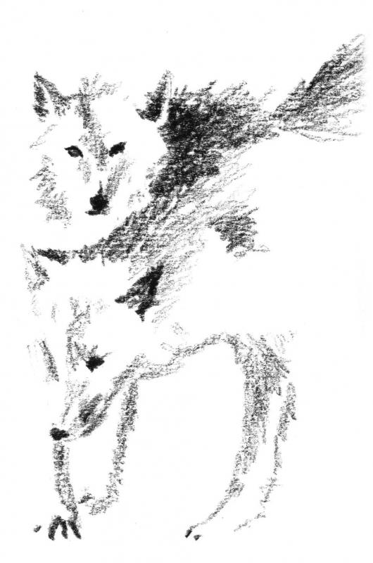 Dessin Animaux Crayon Loup Xix