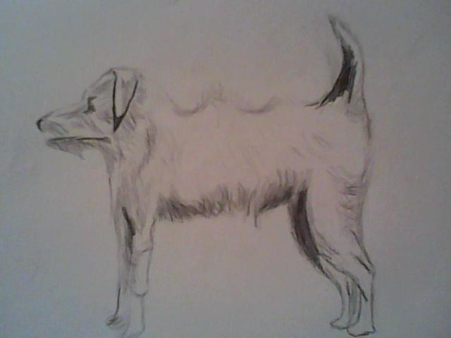 Dessin Veterinaire Chat Loup Ours Animaux Crayon Dessin De Chien