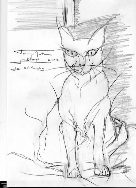 Dessin Chat Bpmbay Felin Race Animaux Crayon Le Chat Bombay
