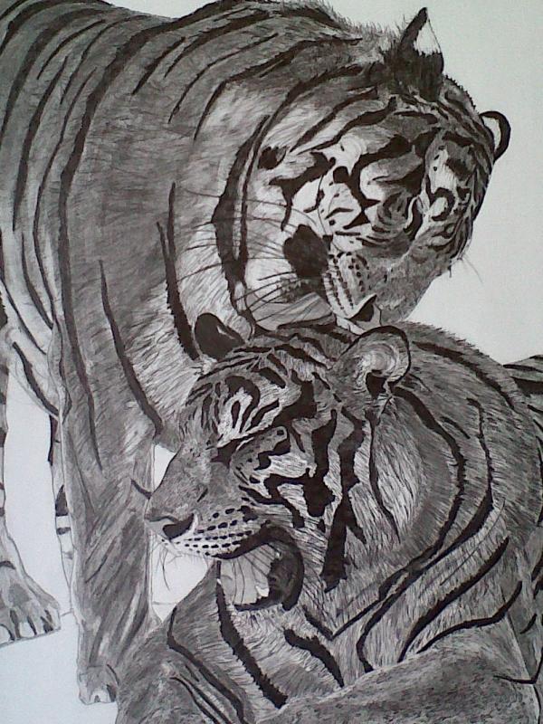 Dessin Félin Animaux Crayon Les Tigres