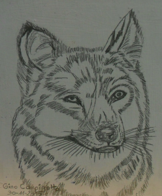 Dessin Animaux Crayon Le Loup N 67