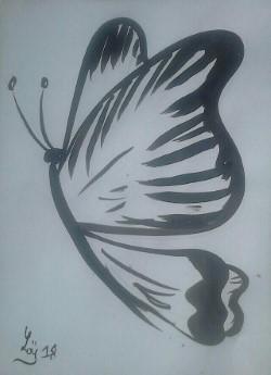 Dessin Papillon Croatie Ile De Brac Maison Blanka Animaux