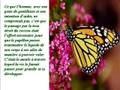 La symbolique du papillon ( Auteur inconnu)