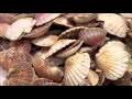 Recyclons les coquillages ! - FUTUREMAG - ARTE