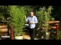 Entretenir et soigner un bambou en pot
