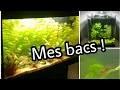 Tour de mes aquariums !