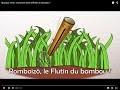 Musique verte : Comment faire siffloter un bambou ?