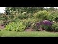 Comment créer un massif de rosiers et vivaces ? - Jardinerie Truffaut TV