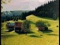 tableaux à l'huile: paysages et portraits avec le chant de chardonnet pour relaxation