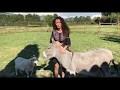 Emmanuelle Rivassoux contre l'abandon des animaux