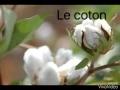 Comment fabrique t-on des vêtements en coton ? QI#4