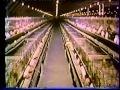 KFC usa 70 vhs k7 l'amerique interdite - fast food chiken - fabrication poulet