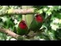 Les oiseaux exotiques de Gilles Sebileau (Vendée)
