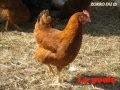 Les animaux de la ferme et leurs cris!