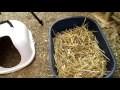 TUTO - Fabrication d'un pondoir pour Canard