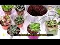 Comment entretenir ses plantes grasses ?