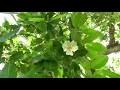 Un jardin créole en Guadeloupe