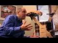 Comment empecher un chat de faire ses griffes destruction chat - Les griffoires