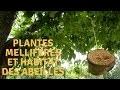 Plantes melliferes et habitat