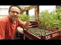 10 astuces pour votre serre à plants