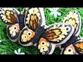Décoration de Biscuits Sablé Papillons - video facile en francais