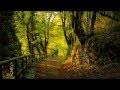 Détente chant des oiseaux: la nature, la forêt et le chant des oiseaux.