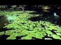 Waterlife (2/4) : l'importance de l'eau sur Terre - Documentaire