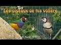 Oiseaux de ma volière