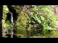 Bruits de la nature, ambiance de la foret avec bruit de l'eau,