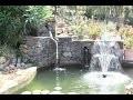 Bassin a koi paysagé de grande classe