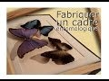 Fabriquer un cadre entomologique