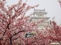 japon cerisiers en fleurs avril 2016