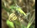 Les  Araignées -  Documentaire Animalier