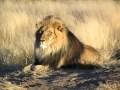 Une halte au Paradis 9 - La savane africaine