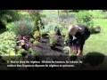Comment réaliser un joli massif de plantes vivaces ? [VIDEO]