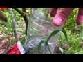 Arroser les plantes - jardinage