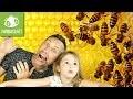 On reconstitue des insectes en papier pour créer un mobile ! Première box abonnement PANDACRAFT
