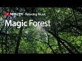 MAGIC FOREST ♫ Musique relaxante, paysages apaisants, foret, Dream music