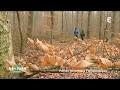 La forêt de Fontainebleau - Visites privées
