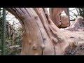 Faux bois - arbre en beton sculpte