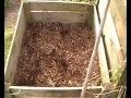 Jardin facile / Création d'un bac de permaculture / potager en carrés