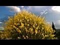Ambiance du sud cigales paysages. Sea, coala and sun (Mer, coline et soleil) #Détente