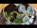 Comment réaliser son terrarium et créer un jardin miniature