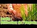 Comment utiliser un engrais en jardinage
