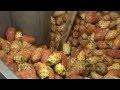 Extraction Huile de pépins de figue de barbarie