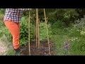 DIY : comment fabriquer un tipi pour plantes grimpantes ?