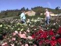 La passion des jardins - Documentaire